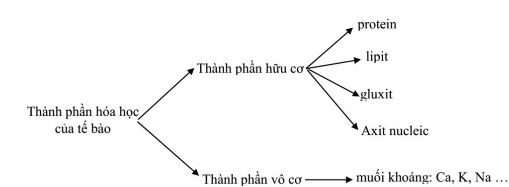 vẽ sơ đồ tư duy về thành phần hóa học của tế bào câu hỏi 1262867 -  hoidap247.com